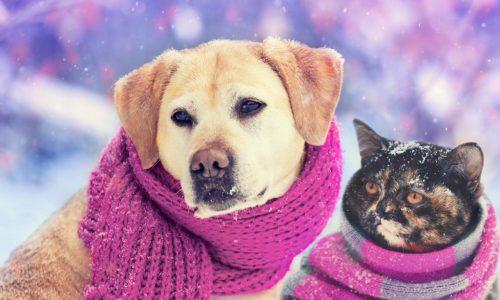 Leczenie chorób wewnętrznych psów i kotów